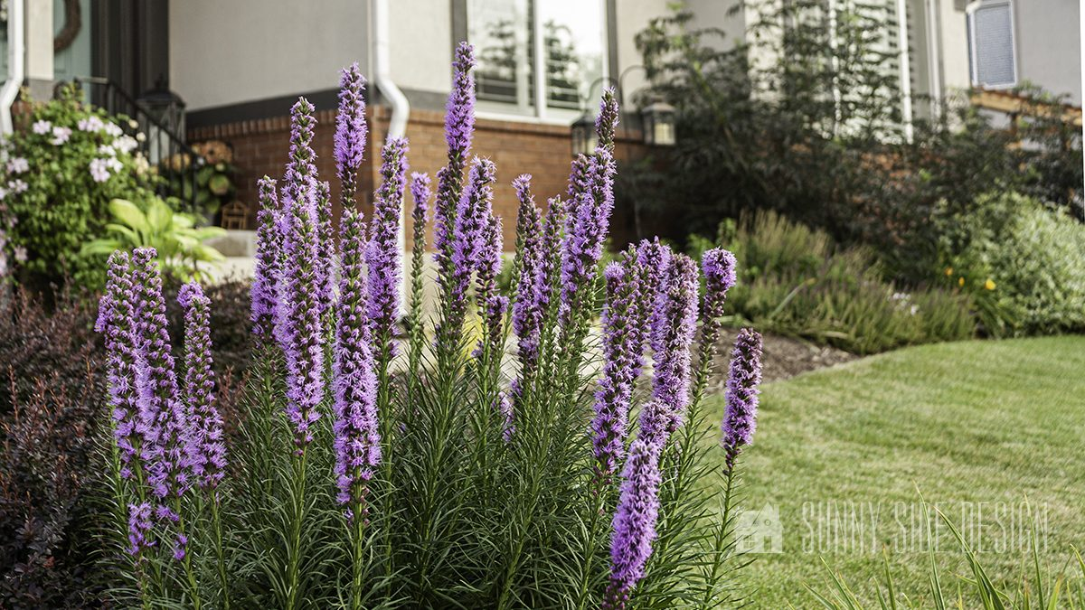 Landscaping a Front Yard | Creating Curb Appeal