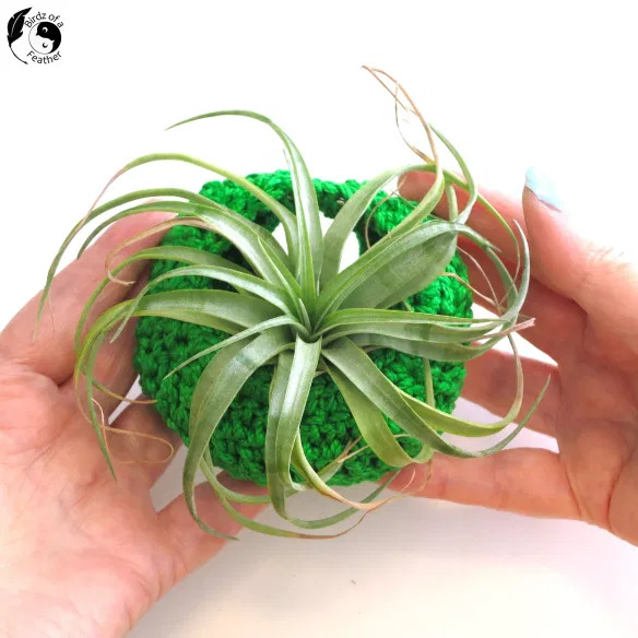diy plant pod