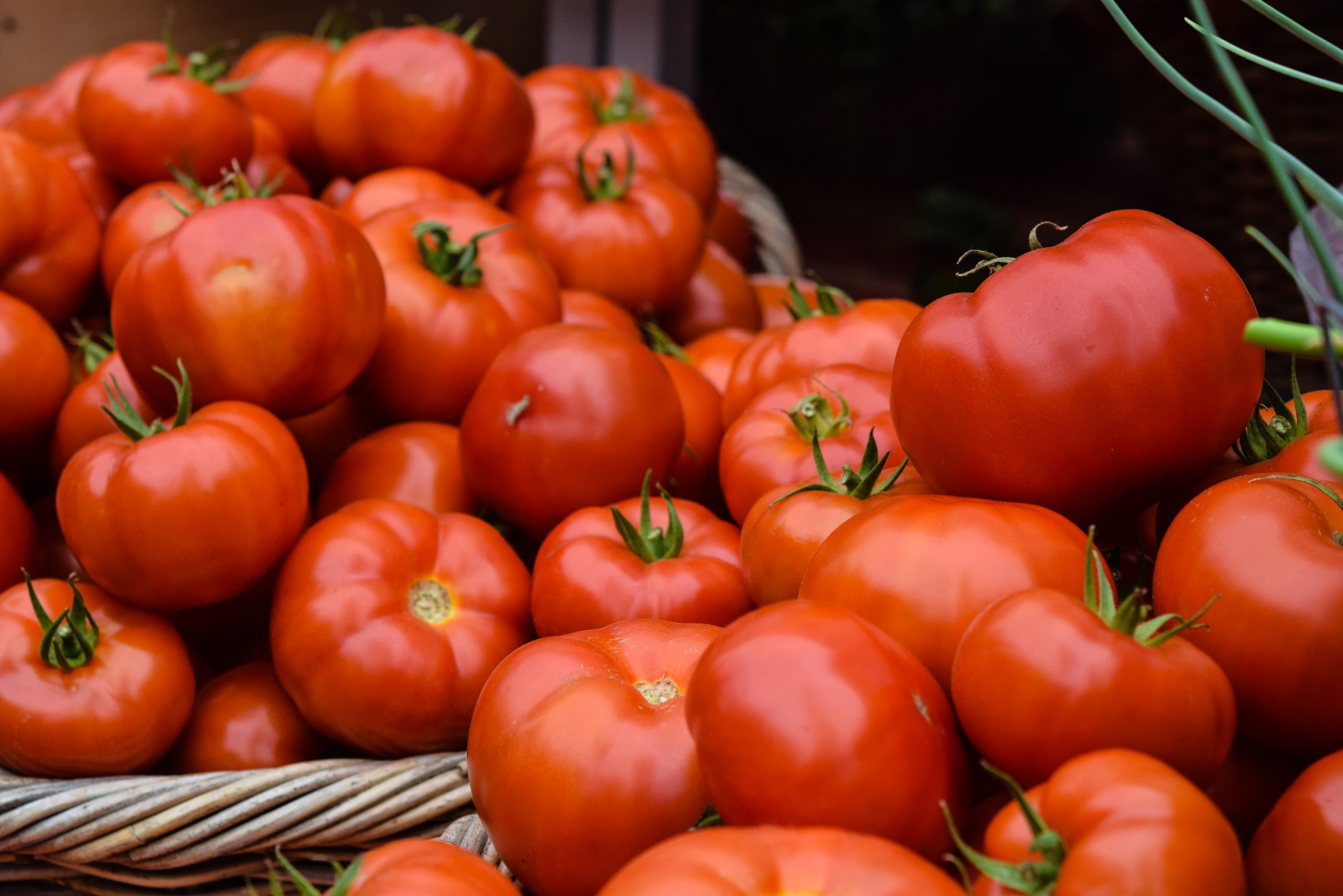 Growing Tomatoes: Simple Tips You Need to Know for Success