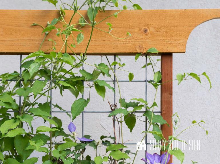 Plant Trellis for Climbing Vines