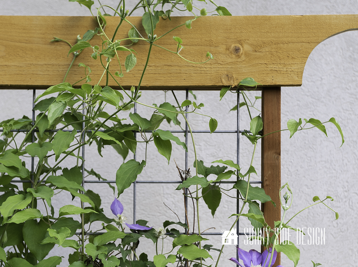 How to Make a Modern Plant Trellis for Climbing Flowers